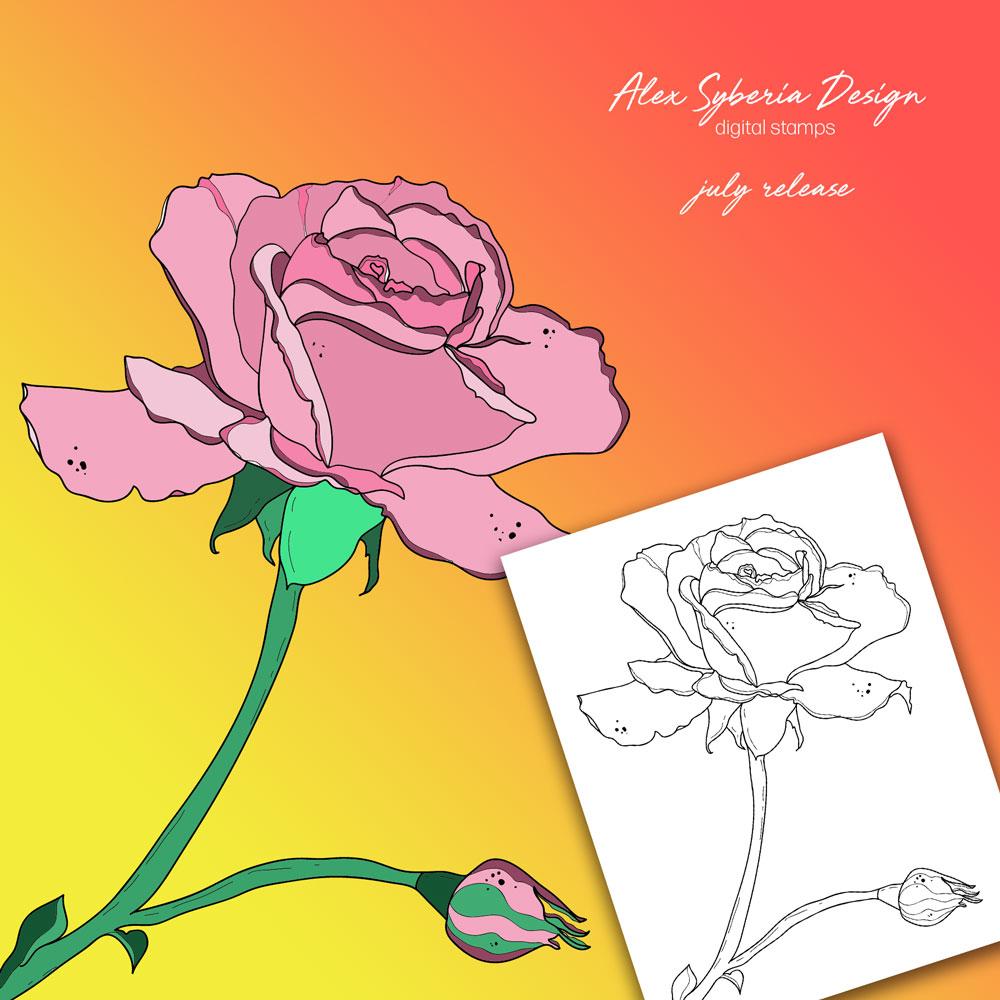 dreamy-rose